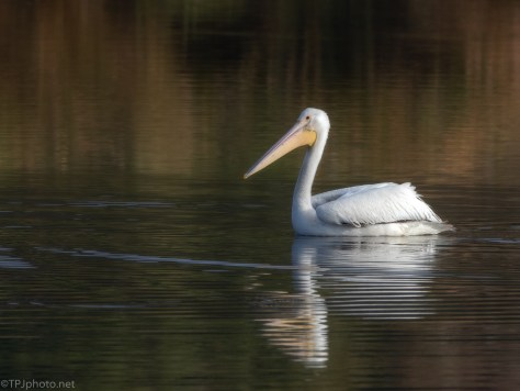 Soft White Pelican - click to enlarge