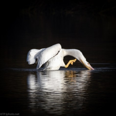 An Itch, Pelican - click to enlarge