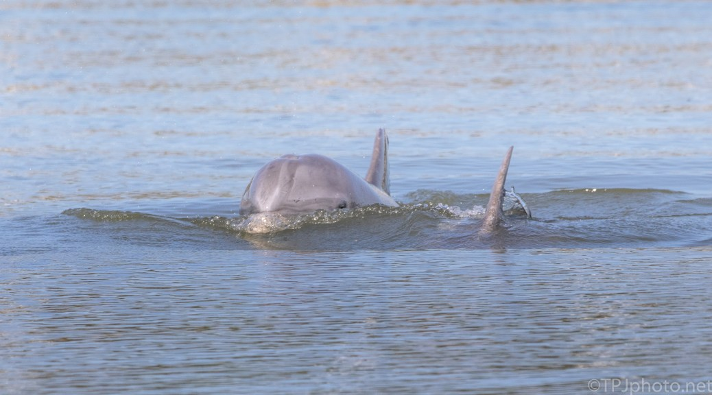 Checking On Me, Dolphin - click to enlarge