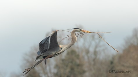 Almost Too Close, Heron - click to enlarge