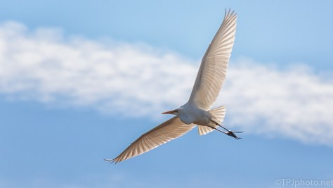 Great Egret On A Clear Day - click to enlarge