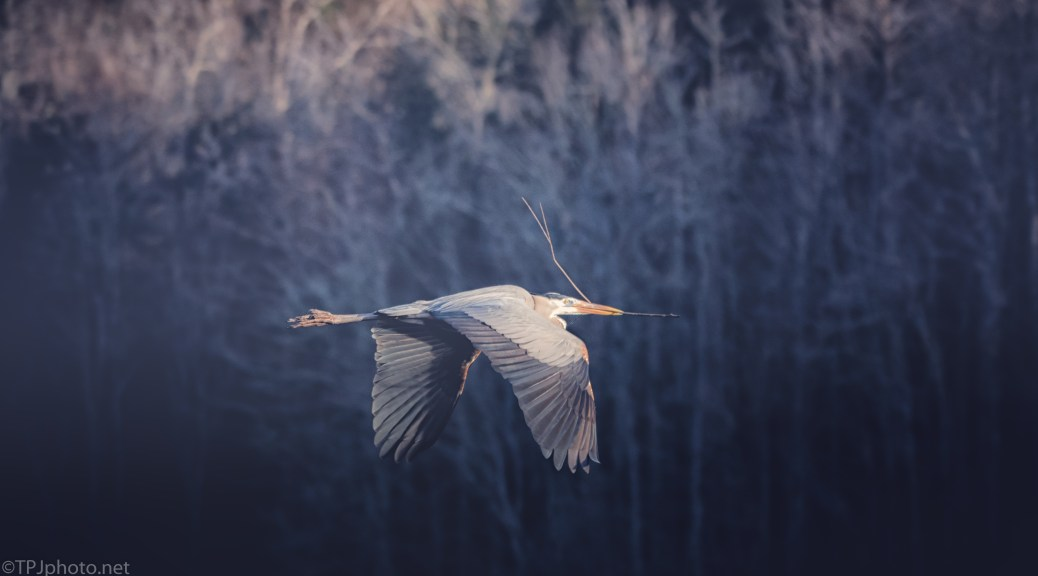 Heading Towards The Nest, Heron - click to enlarge
