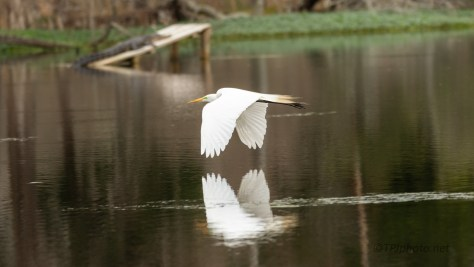 Egret, On A Stick Gathering Mission