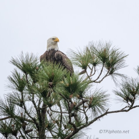 Almost Missed Him, Eagle