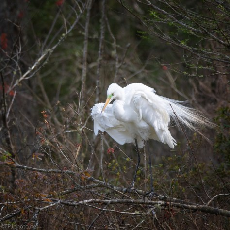 A Little Breeze, Egret