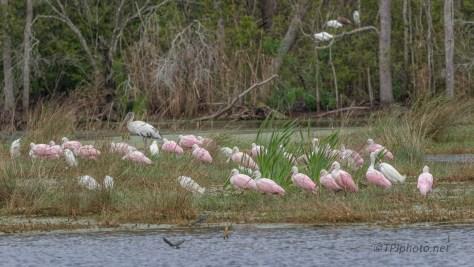Marshland Gathering