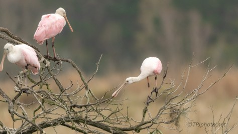 The Kids Are At It Again, Spoonbills