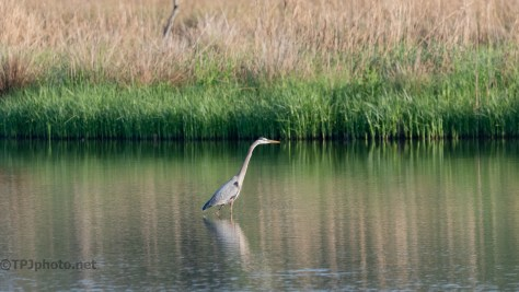 Not Every Photograph Should Be Up Close, Heron