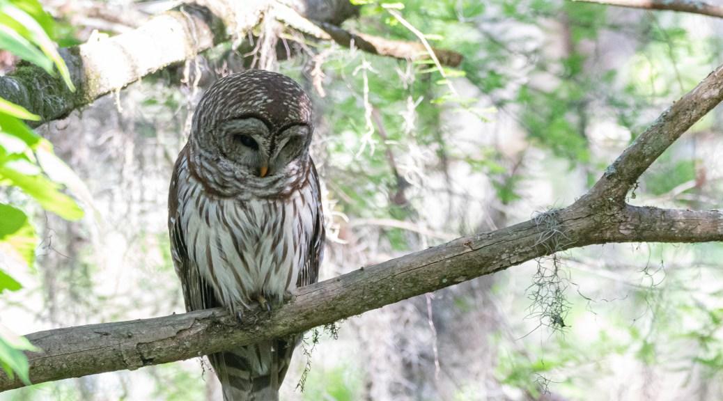 A Few Owls