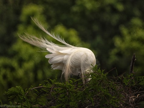 Feathers And Wind