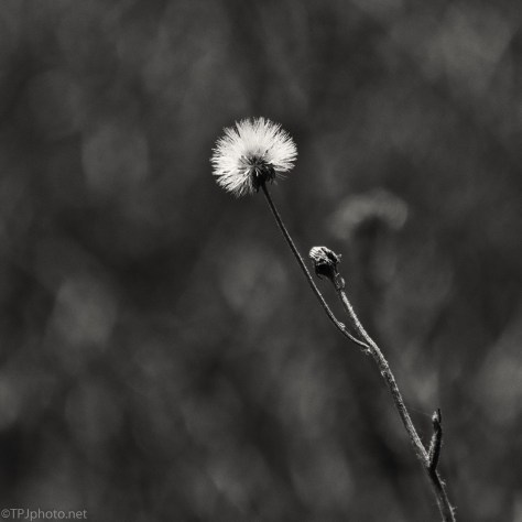 Wild Flowers Have Gone By