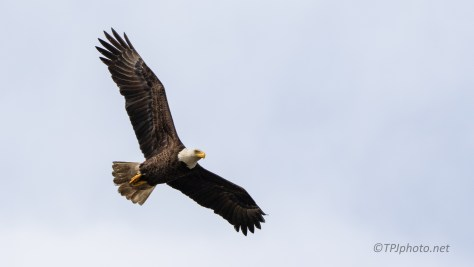 Checking Me Out, Eagle