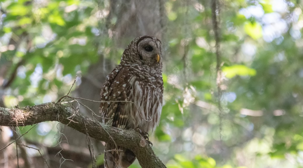 Female Guarding A Young Owl