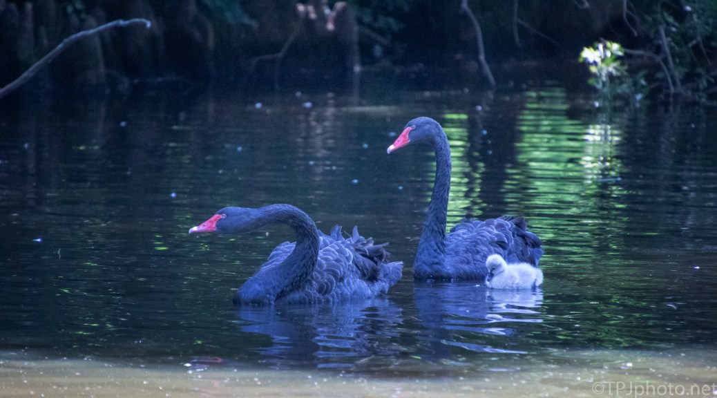 Protective Black Swans