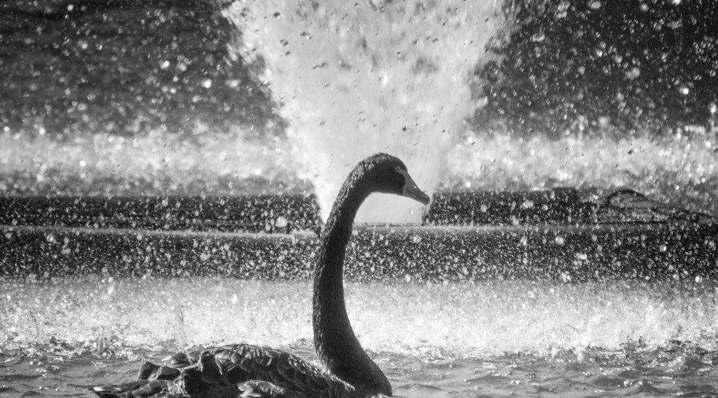 Cooling Off, Swan