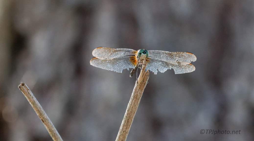 Rough Around The Edges, Dragonfly