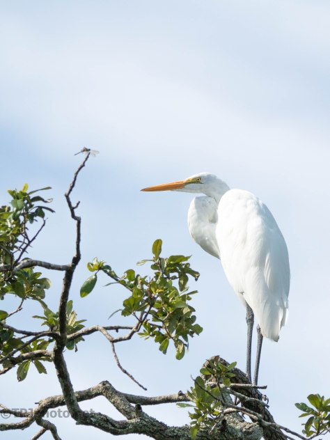 Egret And The Dragonfly