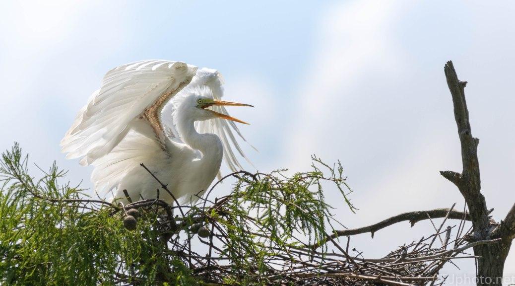 Serious Temper Tantrum, Egret