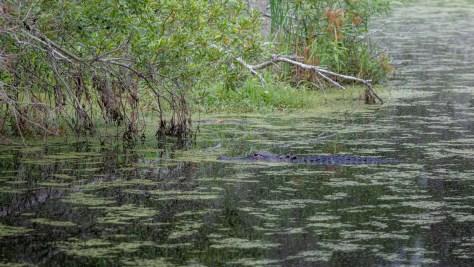 Slip By Unseen, Alligator