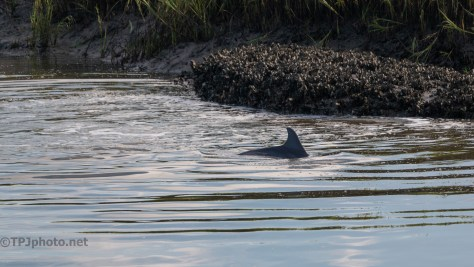 Surprise Dolphin Feeding