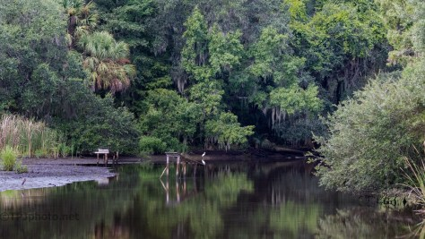 A Marsh Scene, Outside Charleston