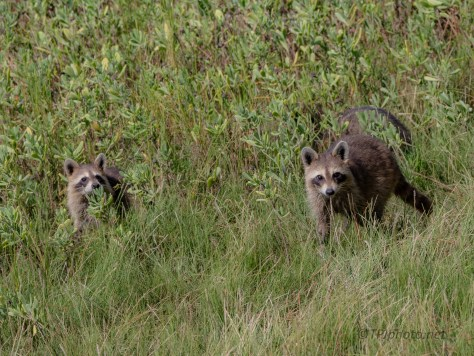Bandits Sneaking About