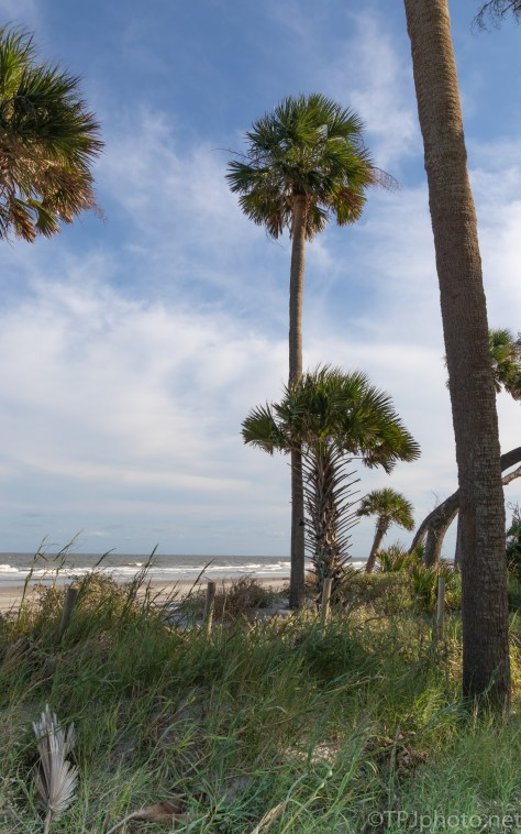 Lowcountry Shore