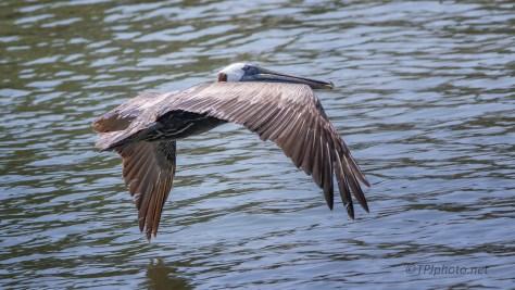 Passing Pelican