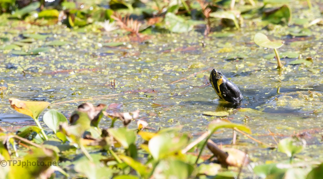 Had To Look Hard, Turtle