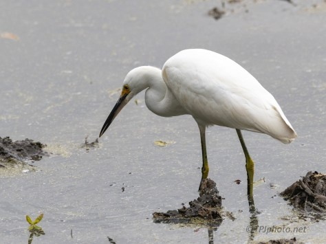 It's On You, Egret