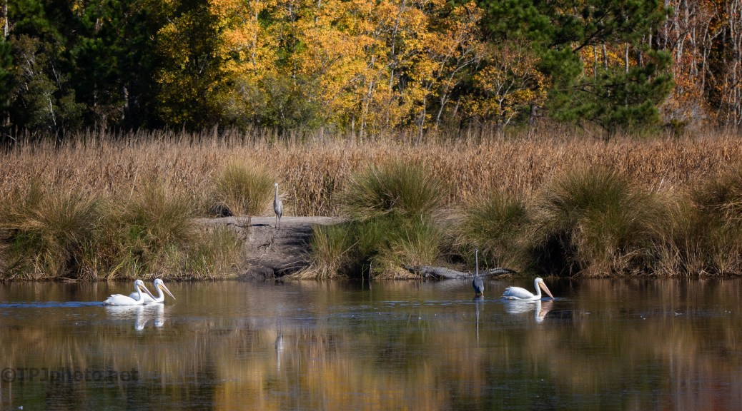 A Sample Of The Marshes We Shoot