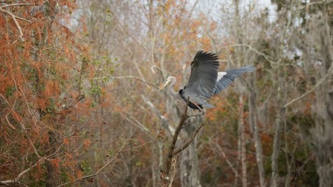 A Stern Warning, Heron