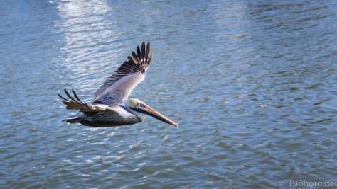 Pelican, Between The Piers
