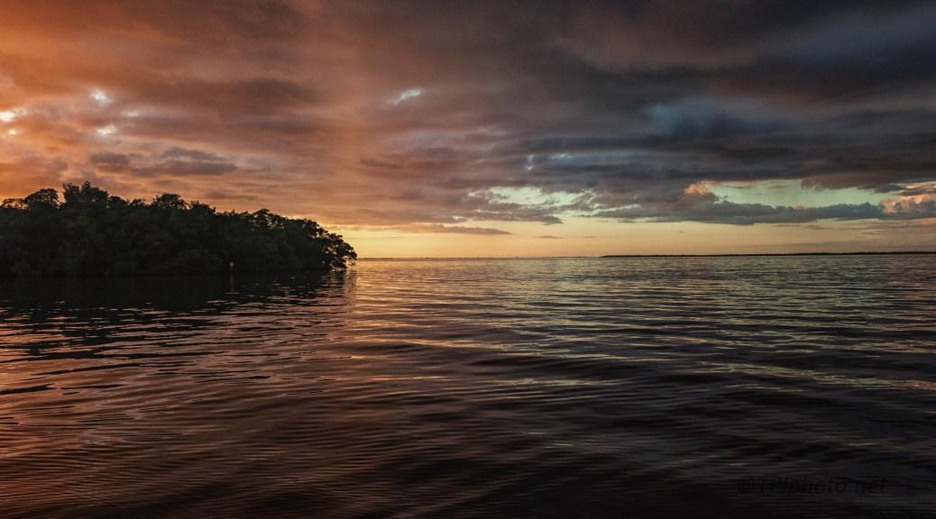 Sunset On Mangroves