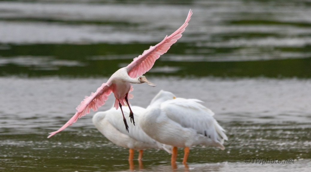 Almost Got By, Spoonbill