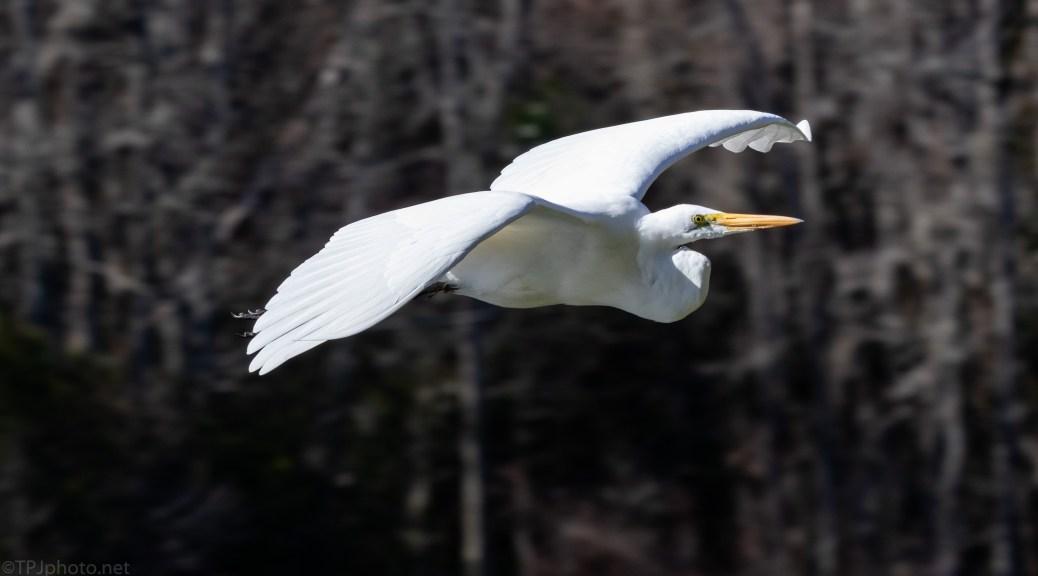 Quick Egret