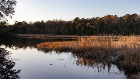 Leaving Before Dark, A Marsh