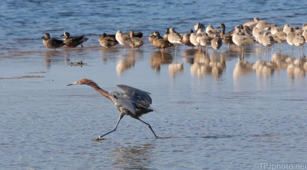 Full Speed Ahead, Egret