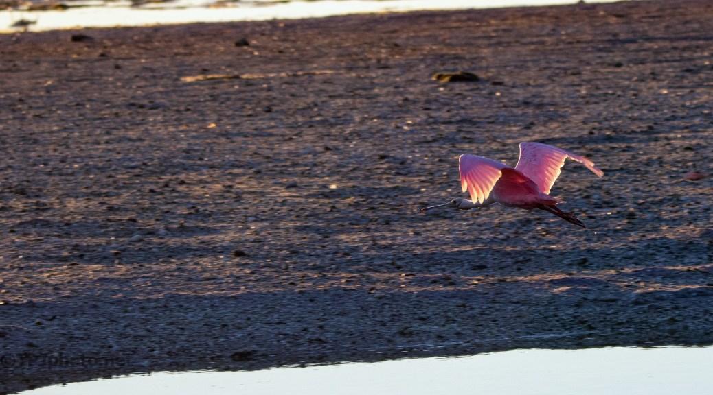 Pink Sundown