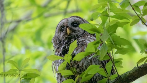 The 'Now What' Look From A Wet Owl