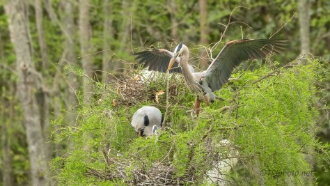 Delivery, Heron