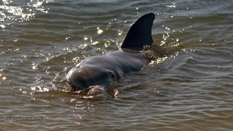 Meeting A Dolphin Eye To Eye