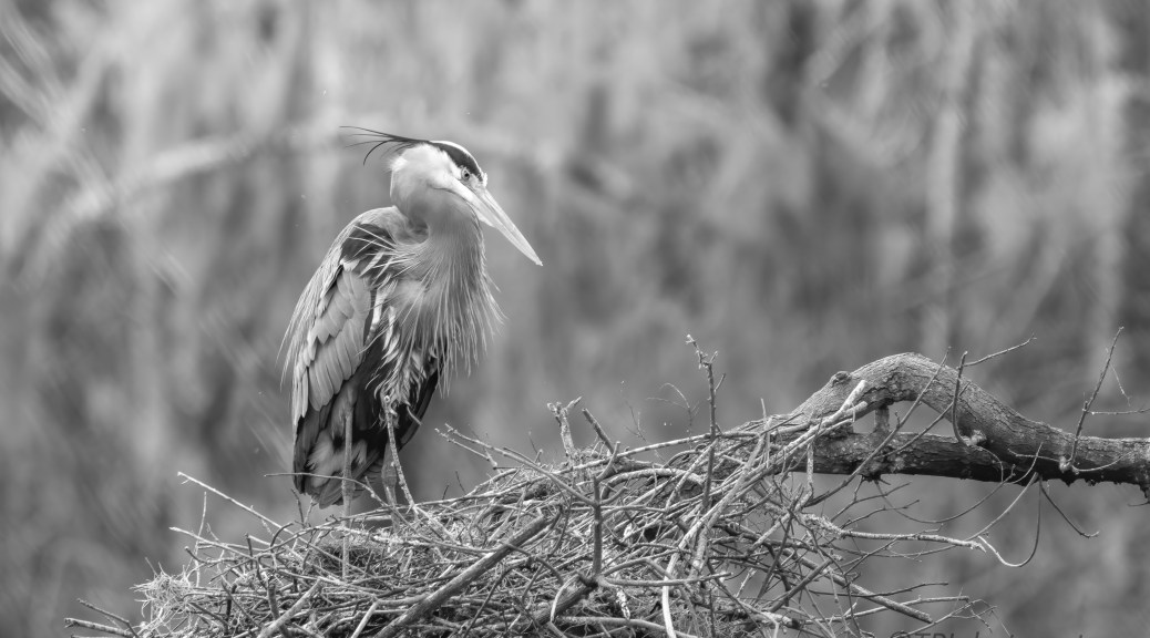 Just Waiting, Heron
