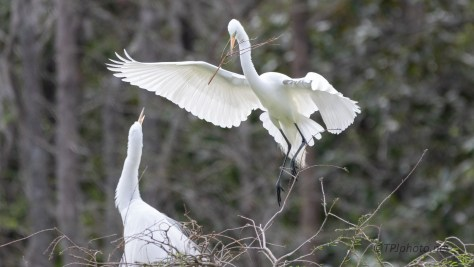 Dropping In, Egret