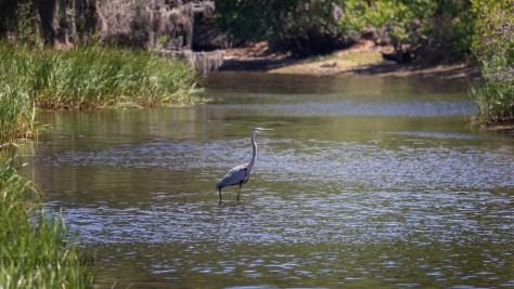 A Marsh Scene, Heron