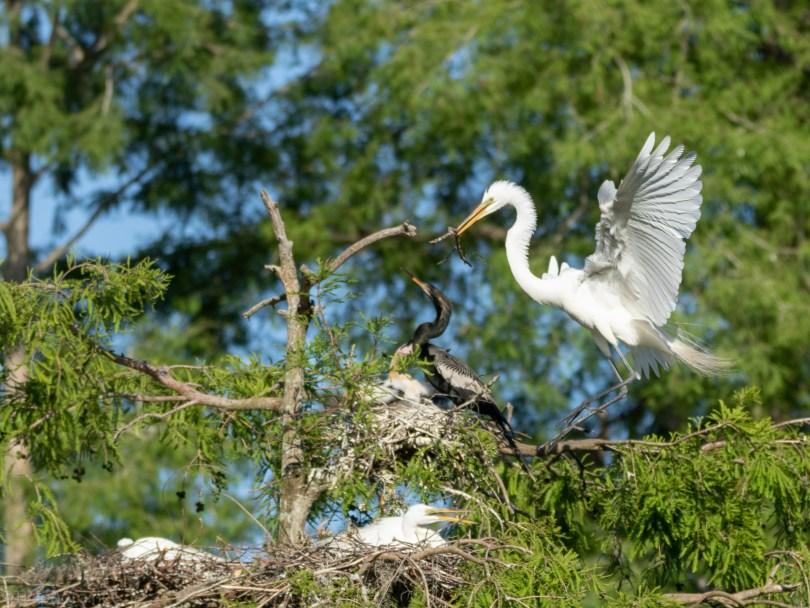 A Far Nest, Egret