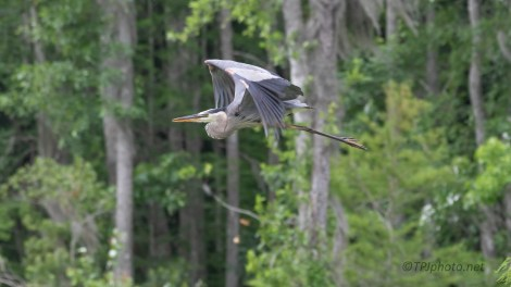 Getting Away Quickly, Heron