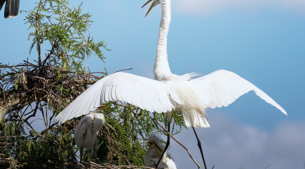 Yelling At The Kids, Egret