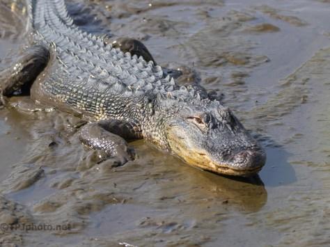 Mud Gator, Part 1
