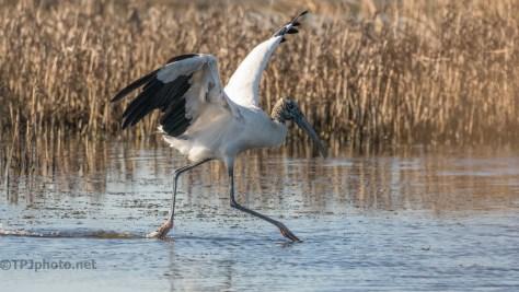 Stork Has Landed